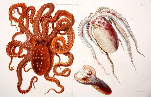 006-I Cefalopodi viventi nel Golfo di Napoli-1896-Giuseppe Jatta