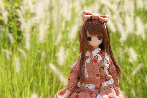 in the grass