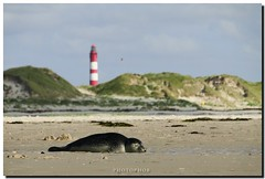 Island of Amrum - Z