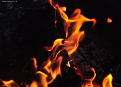 Campfire (Photography Through Tania's Eyes) Tags: campfire fire flame wood burn dutchlakeresort clearwater bc britishcolumbia canada taniasimpson photographer photography photograph photo image copyrightimage nikon nikond90 wells gray country wellsgraycountry