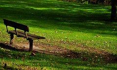 Shadowy Bench (MichaelJFoy) Tags: wood autumn plants brown green nature grass leaves bench scotland nikon stirling seat vegetation rest d90 18105mm