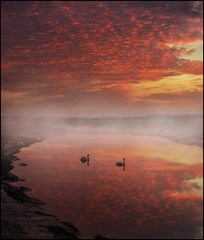 The still of the dawn (adrians_art) Tags: sky cloud mist water birds fog sunrise reflections dawn rivers muteswans