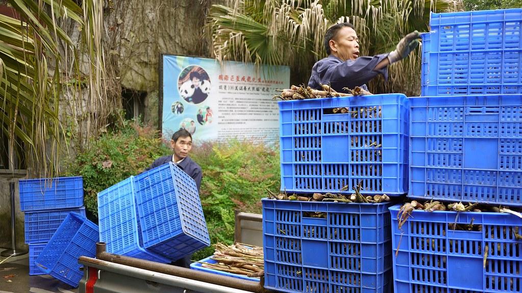 Unloading Bamboo