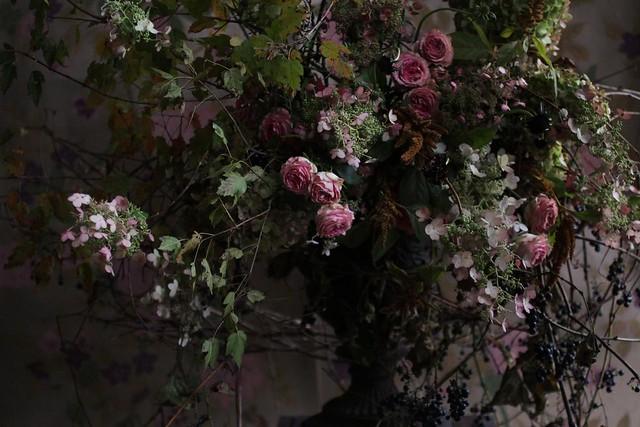 hydrangea_pink_fall
