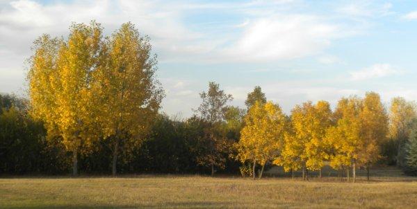 autumn 002