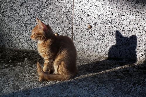 DSCF5917 (Sombra de gato alargada) by Luis Armando Encinas Ramirez (i_real_es)