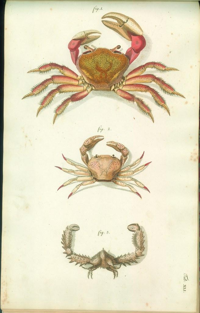 Versuch einer Naturgeschichte der Krabben und Krebse j