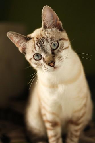 [フリー画像] 動物, 哺乳類, 猫・ネコ, 201109271100