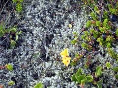 Snaefellsnes Peninsula31 (pensivelaw1) Tags: iceland glacier snaefellsnespeninsula