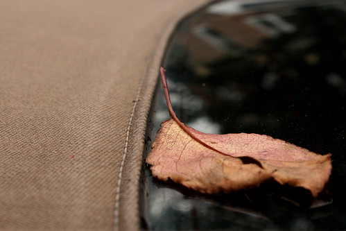Leaf & Ragtop