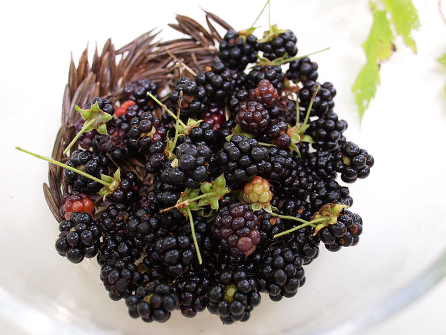 Wild Blacberry and Sweet Cicely