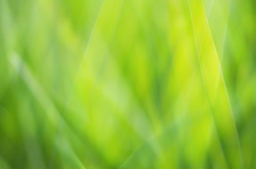 [フリー画像] 花・植物, 葉っぱ, グリーン, 201109300700