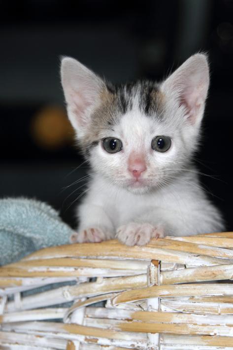 092111_kittens10