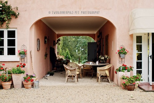French maison by twoguineapigs pet photography