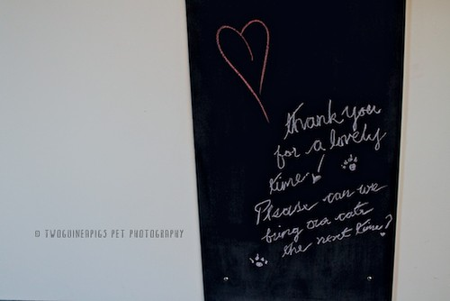 Chalkboard at Tonic Hotel by twoguineapigs pet photography