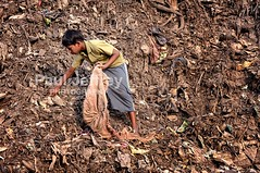 Garbage dump children (GoodOnya!) Tags: boy india boys trash work bag children garbage child labor indian madras poor dump waste recycling chennai tamilnadu scavenger scavengers picker subcontinent southernindia minors ind recyclers