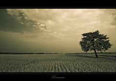 Lonesome (Rhivu_Ray) Tags: world new travel shadow wallpaper cloud india abstract tree art nature clouds canon landscape photography freedom asia peace tour earth horizon farmland september 7d expressive lonely bengal vastness westbengal lonesome wow1 kharagpur bestofnature sigma1020mmf456exdc idream lonesometree indianlandscape bestofindia eos7d canoneos7d bestofcanon landscapesofindia paschimbanga ringexcellence ringofexcellence dblringexcellence tplringexcellence musictomyeyeslevel1 rhivu eltringexcellence rhivuray langamara landscapeofindia popularlandscapeofindia rhitamvarray rhivuphotography