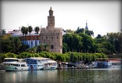 Torre del Oro de Sevilla (tetegil) Tags: espaa sevilla andalucia torredeloro nikond60 rioguadalquivir fototetegil