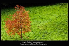 Lone Autumn Tree (Black Stallion Photography) Tags: autumn black tree season photography scotland lone greenery lush stallion igallopfree