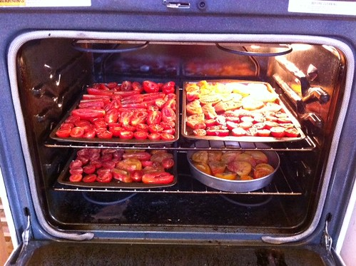 slow-roasting tomatoes (round 2)