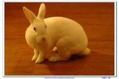 超萌兔子-06 (阿鶴) Tags: macro rabbit nikon flickr d d70s f micro wesley 28 mm af 60mm nikkor 兔子 flick f28 60 chen 萌 飯糰 afd howen 阿鶴 鶴仔 chenhowen 阿鶴仔