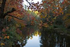 Fall Reflections 3 of 3 (Doug.Mall) Tags: fall leaves blueridgeparkway linvillefalls nikond5000 dougmallnikond5000 dougmall