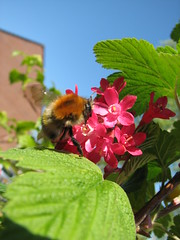 """Hommel • <a style=""""font-size:0.8em;"""" href=""""http://www.flickr.com/photos/68171365@N08/6197347231/"""" target=""""_blank"""">View on Flickr</a>"""