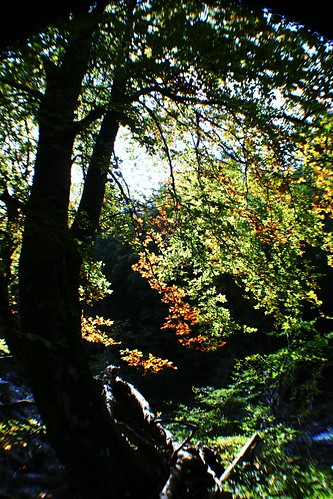 Autumn Colours at Killiecrankie