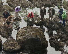 Tide Pool Tourists (scattered1) Tags: ocean camera people beach water pool rock oregon coast photographer natural pacific bureau head tide tourist boulder cobble pacificocean management newport enjoy area land yaquinahead tidepool blm outstanding naturalist yaquina yaquinaheadoutstandingnaturalarea naturalarea 2011 bureauoflandmanagement cobblebeach