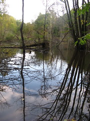 Swamp on the Osprey Trail Photo