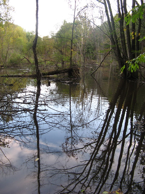 Swamp on the Osprey Trail