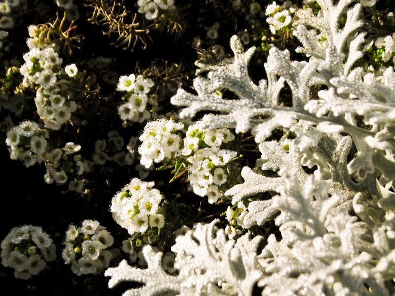 a unique plant. IMG_2042