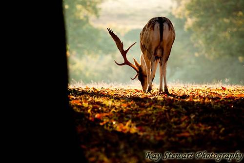 IMAGE: http://farm7.static.flickr.com/6178/6206813094_30a127b499.jpg