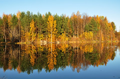 Sunny afternoon (totheforest) Tags: autumn lake fall forest reflections sweden path skog stig hst sj lule norrbotten coth reflektioner nikond90 bergnset theunforgettablepictures htrsket 100commentgroup nikkorafsdx18105mmf3556gedvr coth5 naturesgreenpeace mygearandme blinkagain bestofblinkwinners blinkagainsuperstars blinksuperstar blinksuperstars flickrstruereflection1 flickrstruereflection2 ginordicfeb12