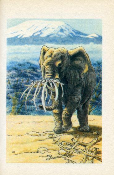Mes plus belles histoires d'animaux, by Jacques TREMOLIN -image-50-150