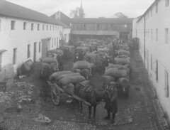October 15, 1923 (National Library of Ireland on The Commons) Tags: 1920s ireland horses yard workers october carts waterford employees 1923 glassnegative sacks nationallibraryofireland ahpoole eryansons ddennysons poolecollection arthurhenripoole