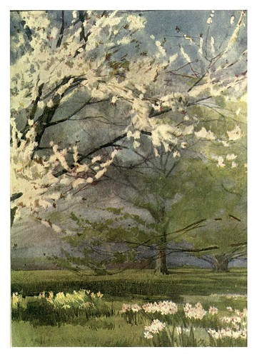028-Cerezo silvestre en Canterbury- Flower grouping in English, Scotch & Irish gardens 1907- Margaret Waterfield