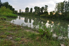 Boundaries don't protect rivers, people do. (Maryam Abdulghaffar  ) Tags: park sunset plants usa lake reflection nature water beauty landscape nikon toledo oh d5000