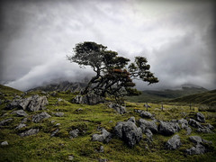 WINDSWEPT AND INTERESTINGLY DESOLATE (kenny barker) Tags: sky mist tree skye green clouds landscape island scotland rocks hills desolate alberoefoglia saariysqualitypictures panasonicg1 daarklands fleursetpaysages lelitedespaysages kennybarker