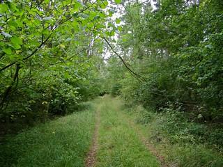 Kilwick Wood