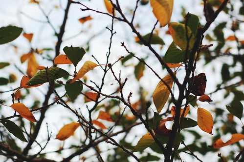 autumn leaves (1)