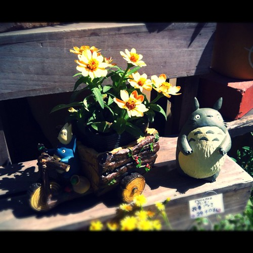 Totoro and flowers #flower #flowers #totoro