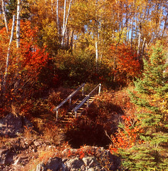 """Stairway to Discovery"" ~ Lake Superior Region,MN (Wolverine09J) Tags: nature minnesota environment asquare myfavoriteforestphoto naturestyle lakesuperiorregion diamondnaturestyle fivestarsartisticimages betterthangoodlevel1 autumnforestcolor"