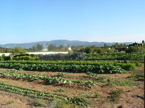 Mano Farm