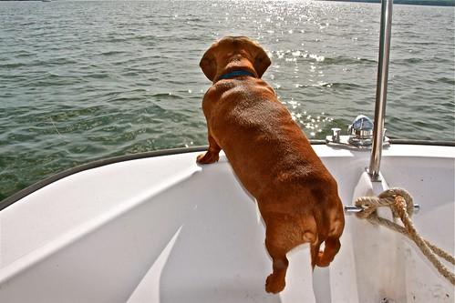 Boat Dog!