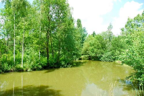 Arborétum Mlyňany 6/2010