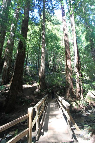 Easy trail at Muir Woods, San Francisco