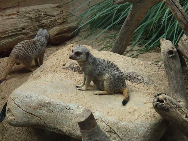 Zoo 0195
