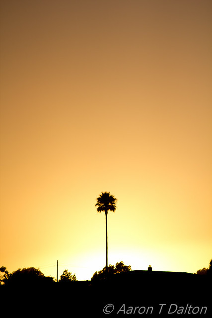 A Lone Palm by Sunset