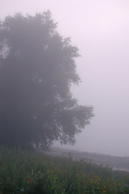 North Riverfront Park, in Saint Louis, Missouri, USA - trees in fog